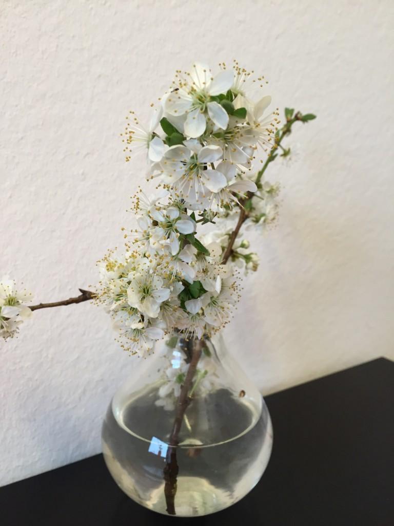 Blühende Kirschblütenzweige in einer kleinen Glasvase.