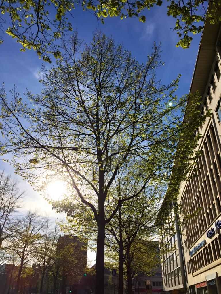 Frühling in Bielefeld