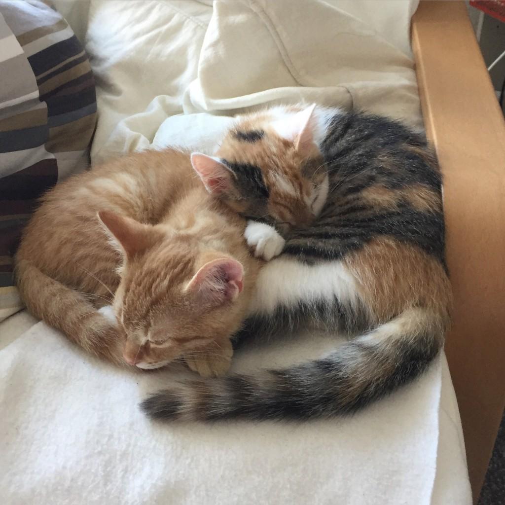 Meine Katzenkinder: Pünktchen und Anton. <3