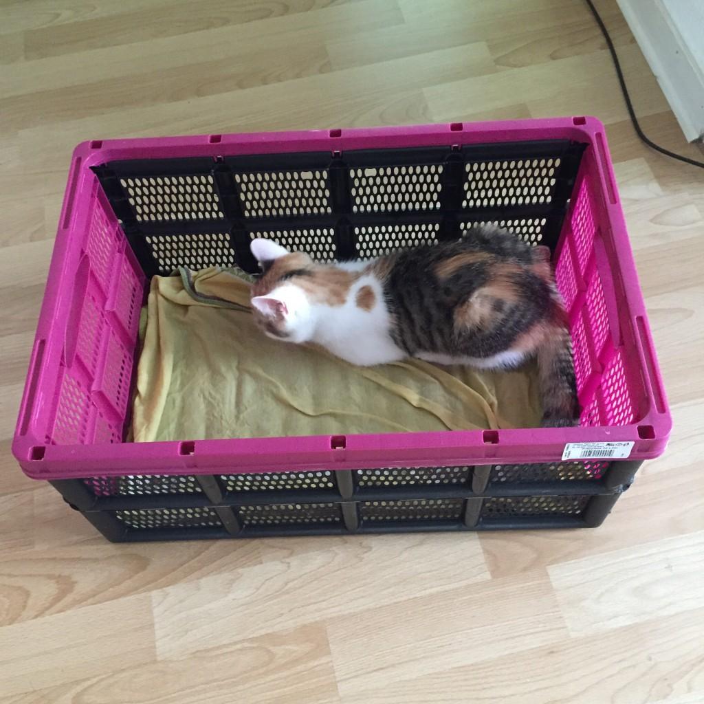 Pünktchen - sie hat gerade auf dem nass-kalten Handtuch in der Einkaufsbox Platz genommen.
