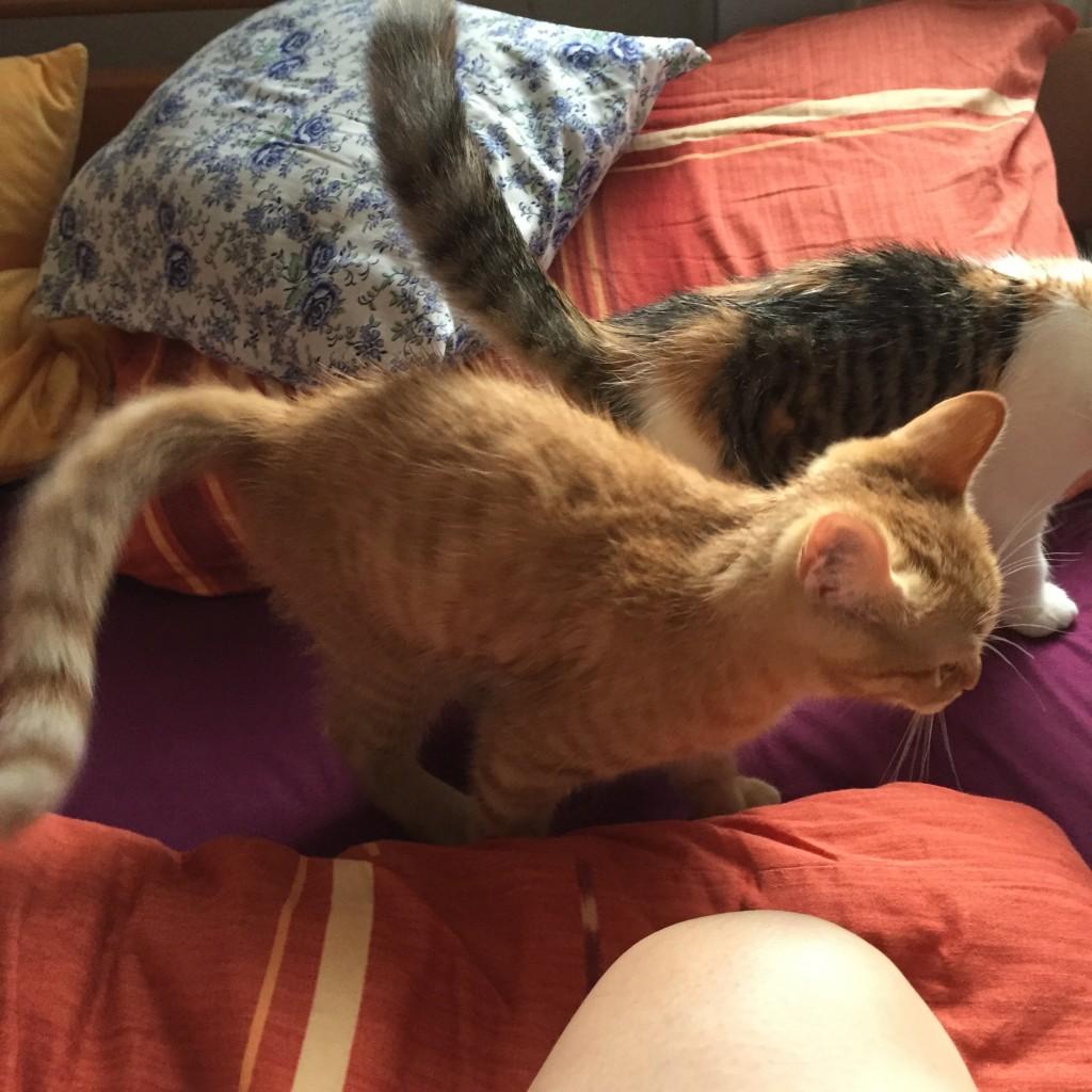 """Meine Katzenkinder nach der """"Katzenwäsche"""". ;)"""