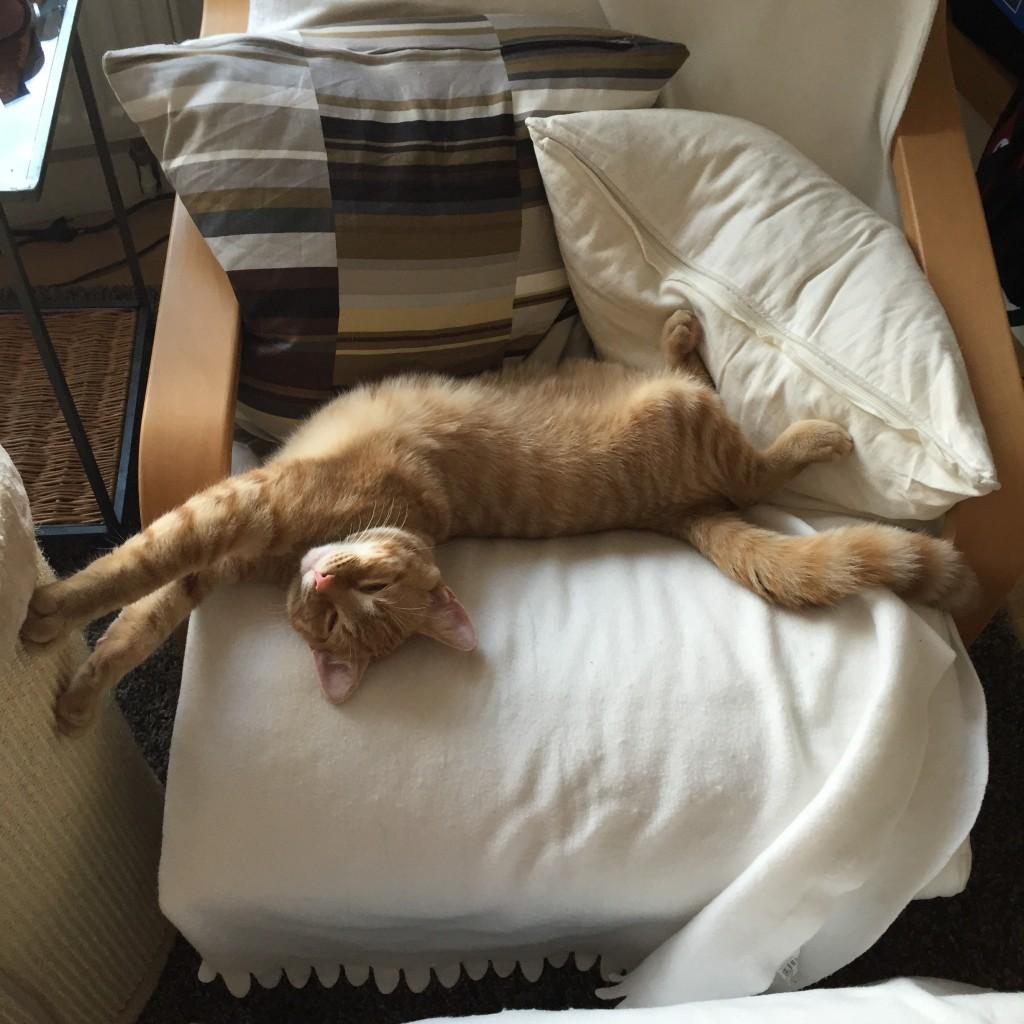 Anton macht Yoga oder so auf meinem Lesesessel. Auf jeden Fall liegt er dort ausgestreckt.