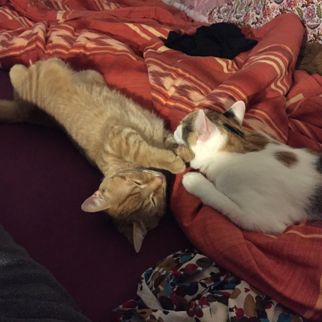 Anton und Pünktchen liegen zusammen (neben mir) auf meinem Bett.