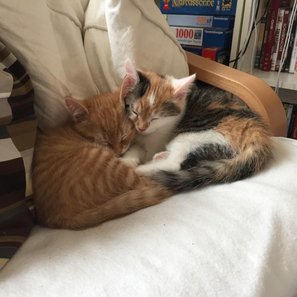Pünktchen und Anton kuscheln gemeinsam auf meinem Lesesessel.