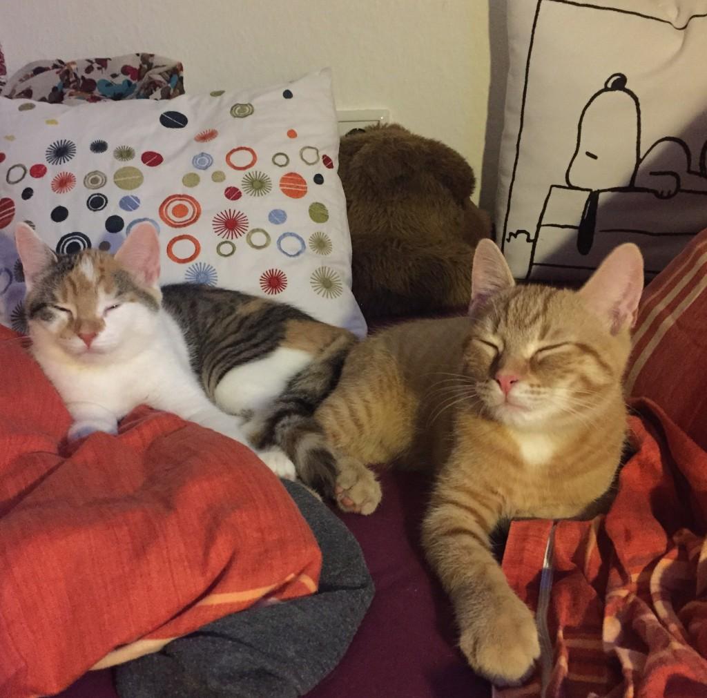 Pünktchen (links) und Anton (rechts) liegen gemeinsam in meinem Bett und schlafen. Auf diesem Foto sind die beiden ca. 6 Monate alt.