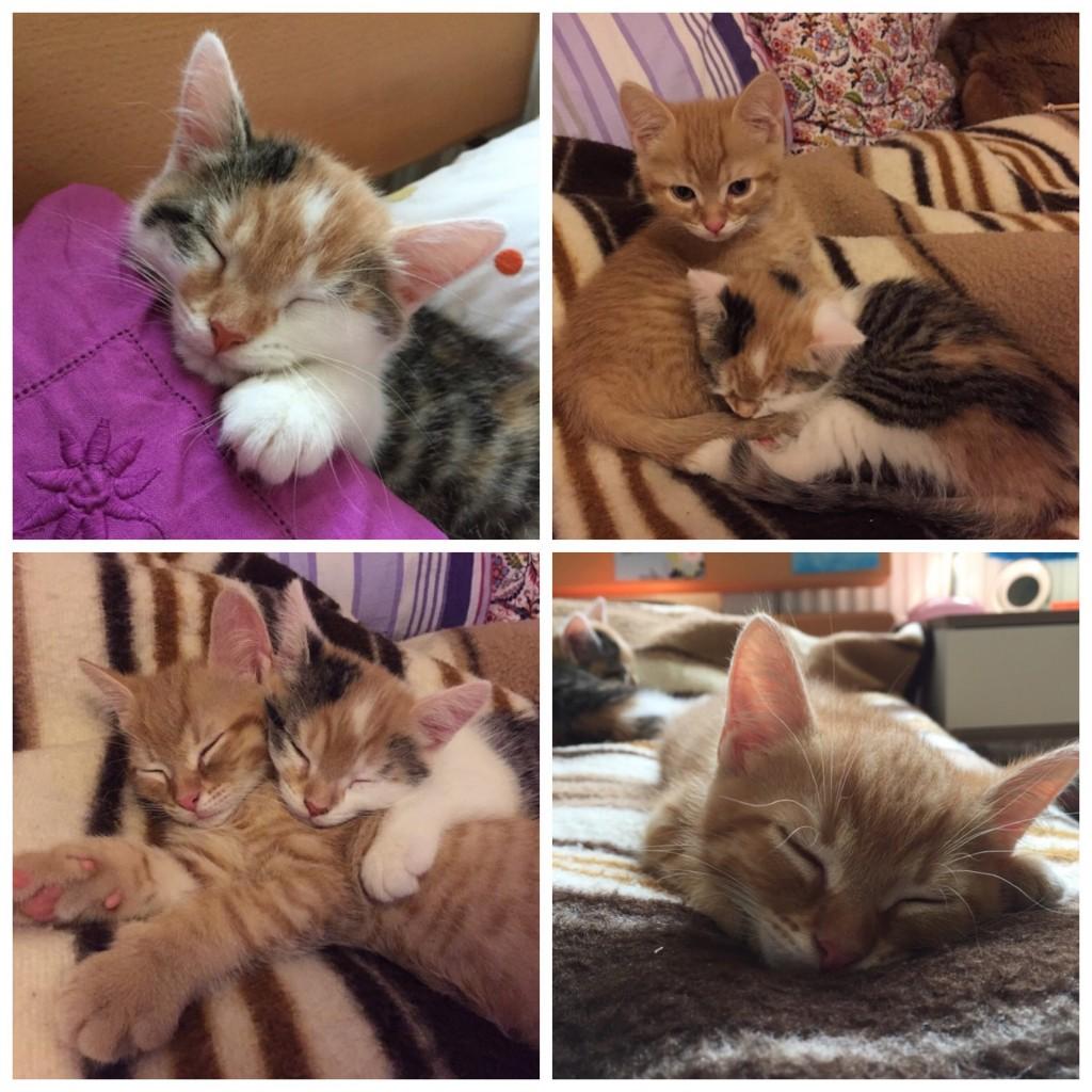 """Bild 1 (oben links): Pünktchen schläft an mein Kopfkissen gekuschelt. Bild 2 & 3 (oben rechts & unten links): Nachdem die beiden unter dem Bett hervorgekommen waren und alles """"erledigt"""" hatten, haben sie sich gemeinsam auf die Wolldecke in mein Bett gekuschelt. Bild 4: Anton schläft auf der Wolldecke in meinem Bett."""