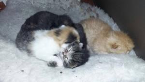 Pünktchen mit ihren Geschwistern: Oreo, Prinzessin und Anton ein paar Tage nach ihrer Geburt.