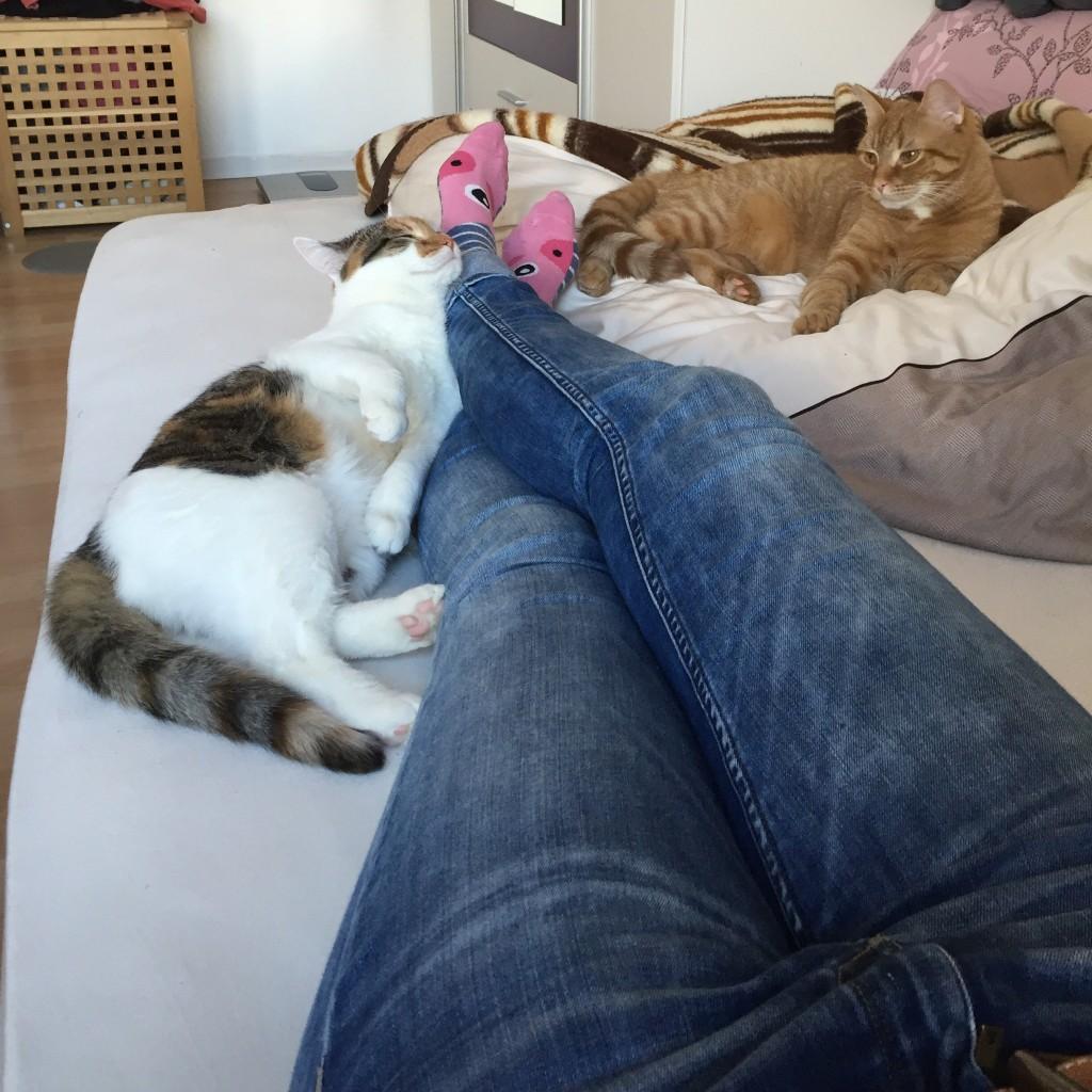 Pünktchen (links von meinen ausgestreckten Beinen) und Anton (rechts auf meiner Bettdecke liegend) heute - kurz nachdem ich von der Arbeit nach Hause gekommen bin und mich ein wenig auf meinem Bett ausgestreckt habe.